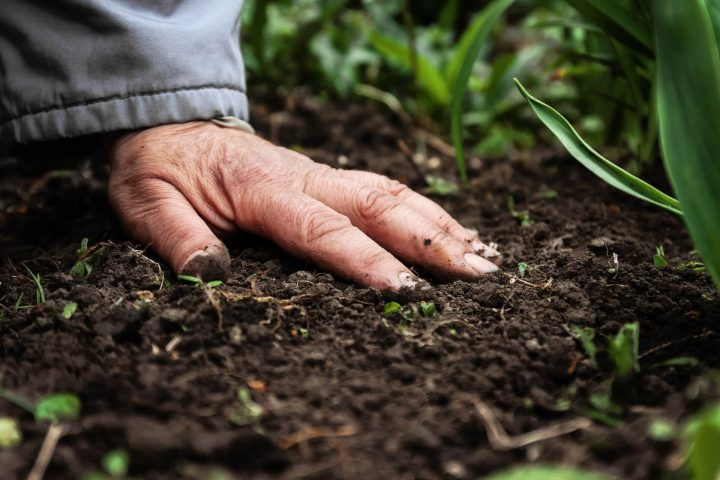 Substance Fertilizers, Health, Environment, and Bio-Fertilizers