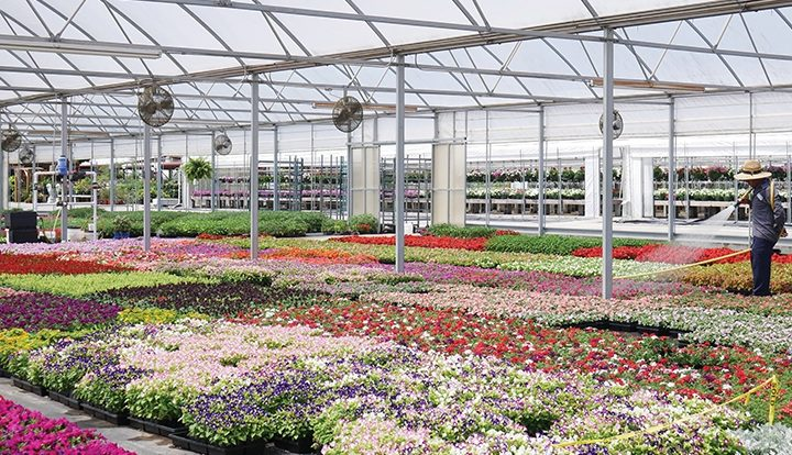 Find trusted greenhouse supplier online